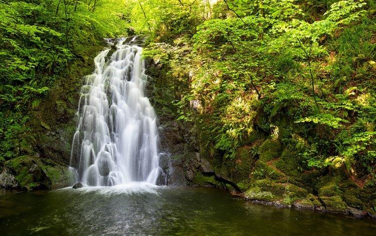 деревья, вода, природа, камни, водопад, trees, water, nature, stones, waterfall
