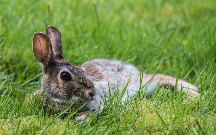 grass, nature, animal, ears, hare, bunny