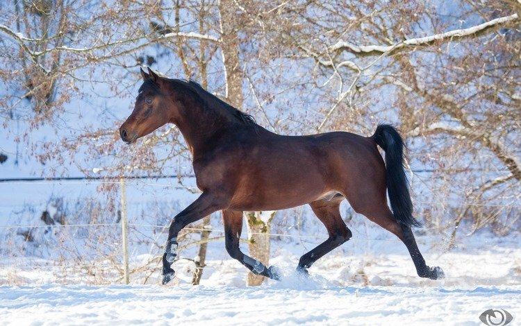 horse, snow, winter, grace