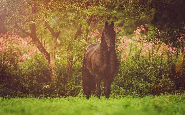 лошадь, природа, конь, грива, фриз, horse, nature, mane, frieze