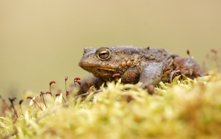 frog, moss, toad, amphibians