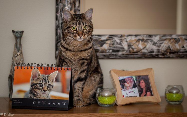 глаза, фон, кот, усы, кошка, взгляд, дом, уют, eyes, background, cat, mustache, look, house, comfort