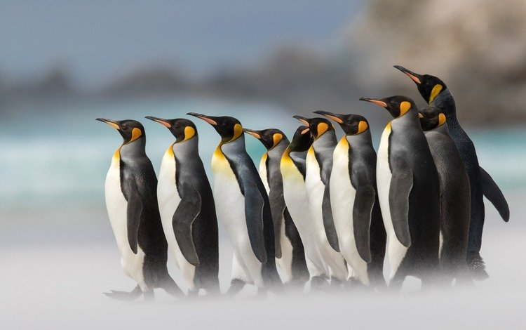 birds, penguins, arctic