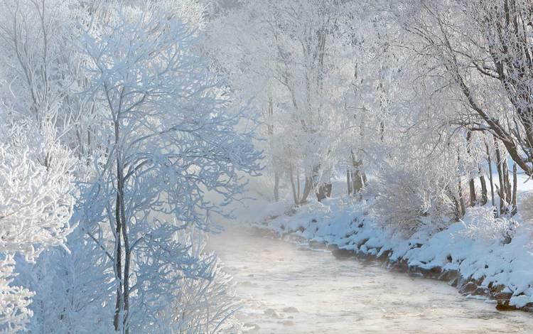 деревья, река, природа, лес, зима, иней, trees, river, nature, forest, winter, frost