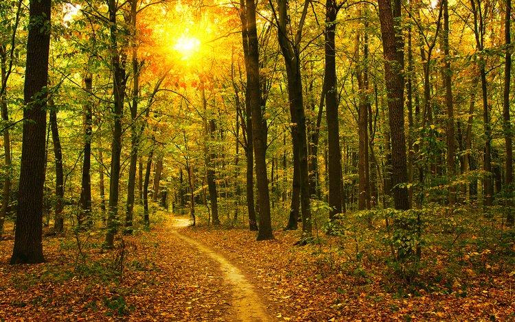 деревья, природа, лес, стволы, осень, тропинка, trees, nature, forest, trunks, autumn, path