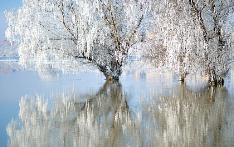 озеро, природа, зима, отражение, иней, ивы, lake, nature, winter, reflection, frost, willow