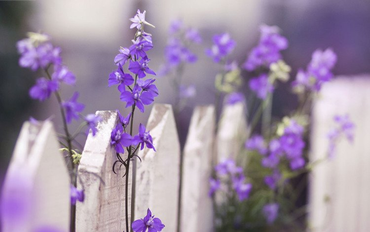 цветы, макро, забор, flowers, macro, the fence