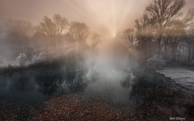 деревья, река, природа, лес, туман, иней, trees, river, nature, forest, fog, frost