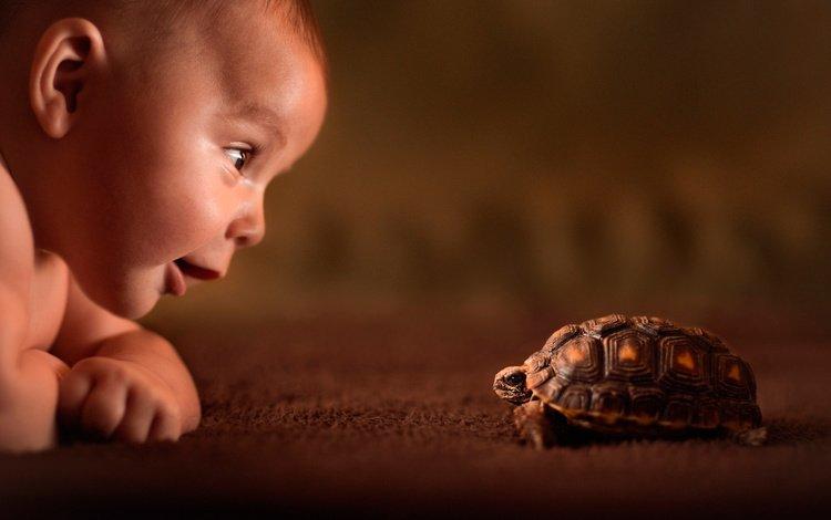 улыбка, черепаха, дети, ребенок, друг, любопытство, знакомство, знакомства, smile, turtle, children, child, each, curiosity, familiarity, acquaintance
