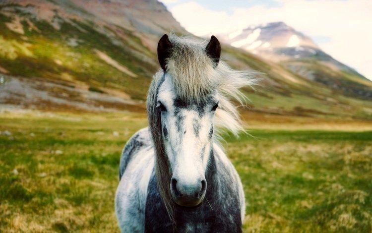 лошадь, горы, пейзаж, долина, исландия, боке, horse, mountains, landscape, valley, iceland, bokeh