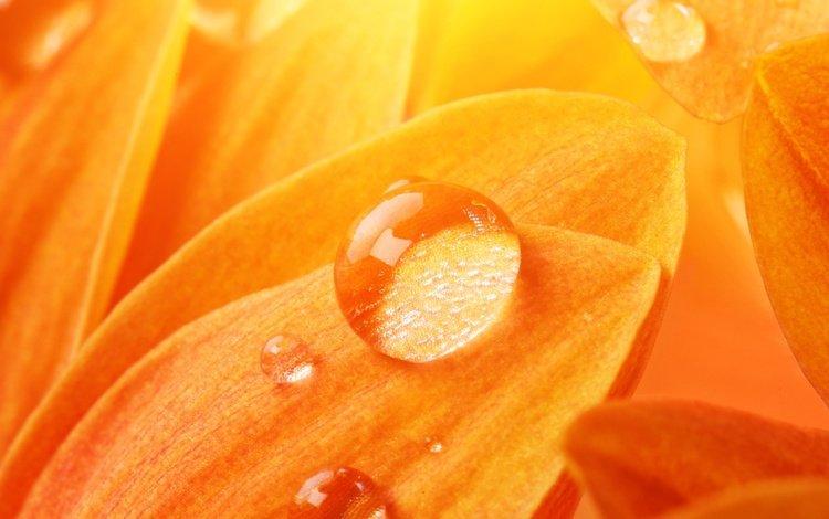 light, yellow, flower, rosa, drops, petals