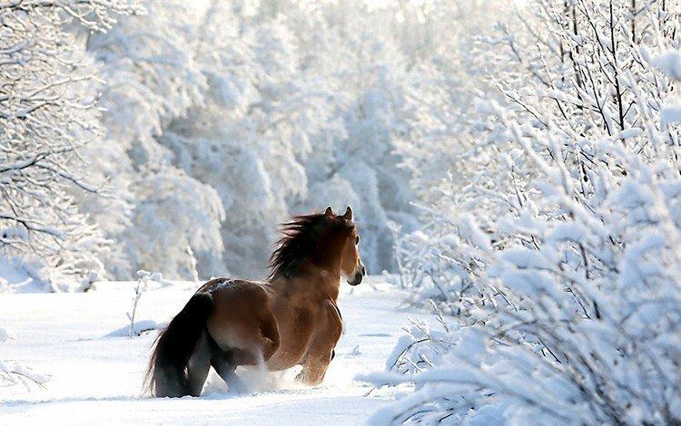 лошадь, деревья, снег, лес, зима, ветки, конь, horse, trees, snow, forest, winter, branches