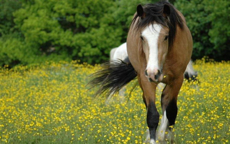 морда, цветы, лошадь, трава, поляна, луг, конь, грива, face, flowers, horse, grass, glade, meadow, mane