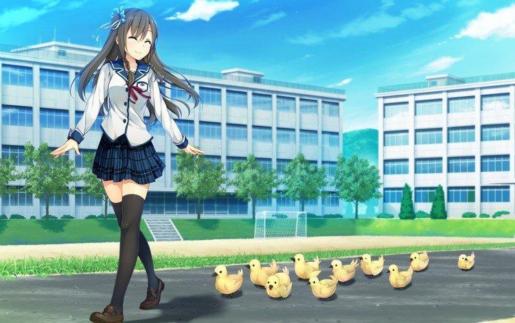 утенок, школьная форма, visual novel, аниме девушки, sorairo innocent, tsukigase mahiru, thigh-highs, duck, school uniform, anime girls