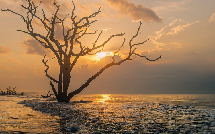 природа, дерево, закат, море, океан, южная каролина, nature, tree, sunset, sea, the ocean, south carolina