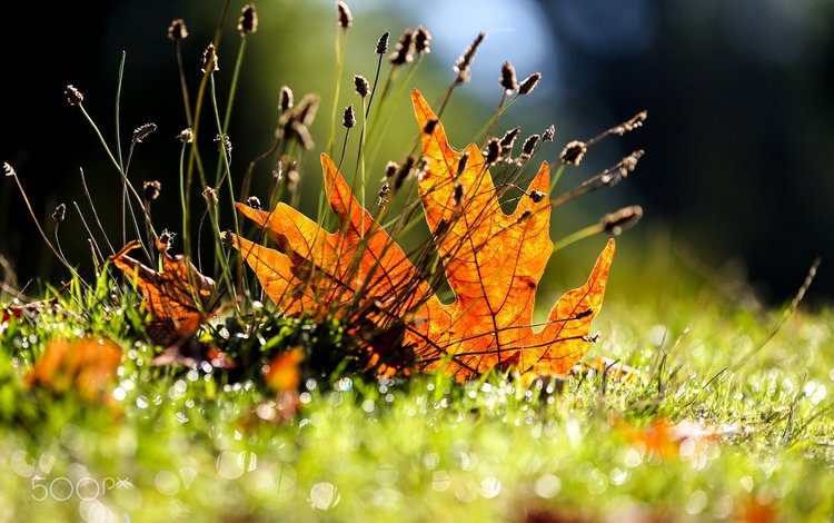 grass, leaves, macro, autumn