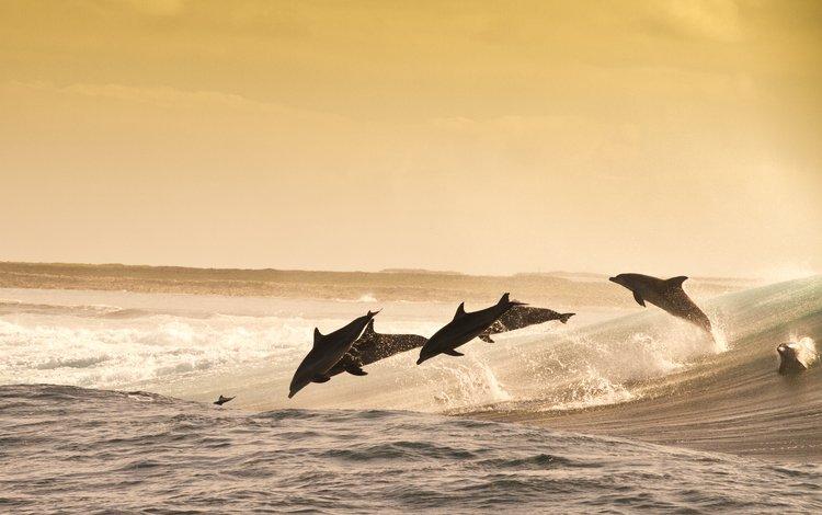 море, животные, прыжок, океан, дельфины, sea, animals, jump, the ocean, dolphins