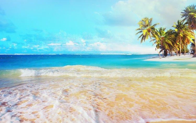 небо, лето, облака, залив, природа, пальмы, берег, океан, пейзаж, тропики, море, карибский бассейн, песок, пляж, the sky, summer, clouds, bay, nature, palm trees, shore, the ocean, landscape, tropics, sea, caribbean, sand, beach