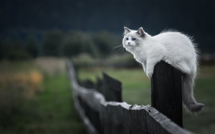 cat, muzzle, mustache, look, the fence, kitty