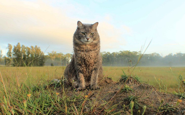 nature, cat, field, look, space