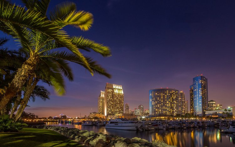 night, lights, the city, palm trees, usa, san diego