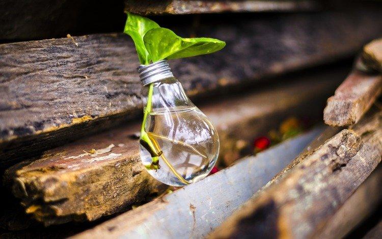 leaves, board, plant, light bulb