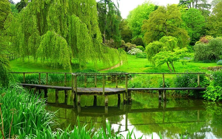 trees, river, the bridge, park, summer, england
