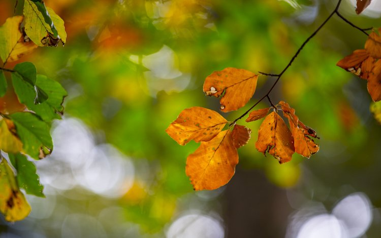 leaves, macro, branches, autumn