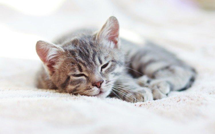 cat, sleep, kitty, house, blanket
