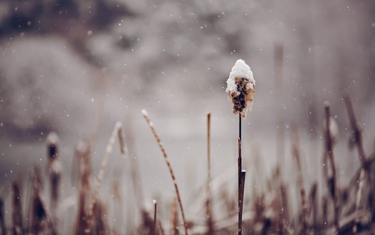 grass, snow, nature, plants, macro
