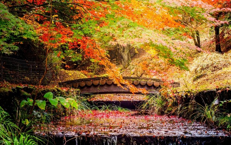 trees, leaves, park, stream, bridge, autumn, japan, cascade