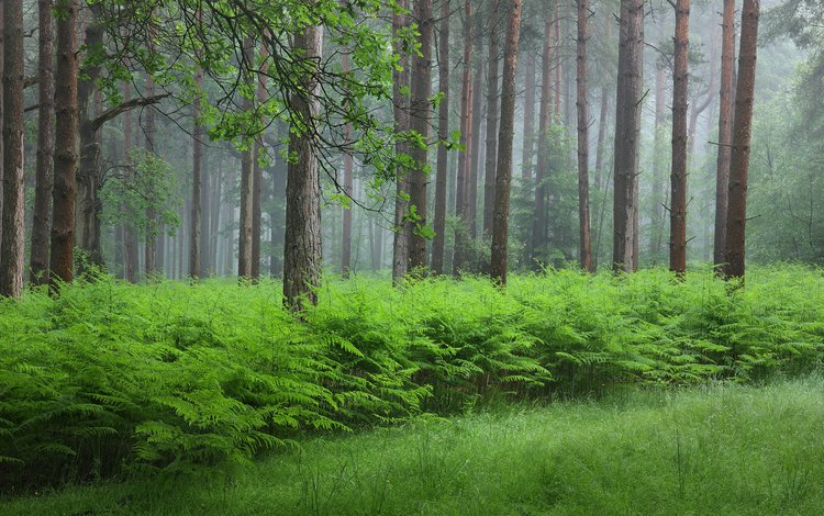 трава, папоротник, деревья, природа, растения, лес, стволы, кусты, лето, grass, fern, trees, nature, plants, forest, trunks, the bushes, summer