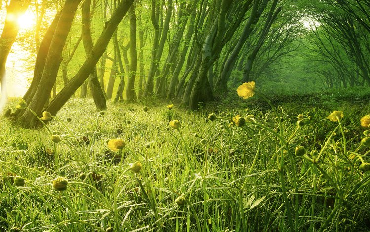 flowers, grass, trees, nature, trunks, sunny day