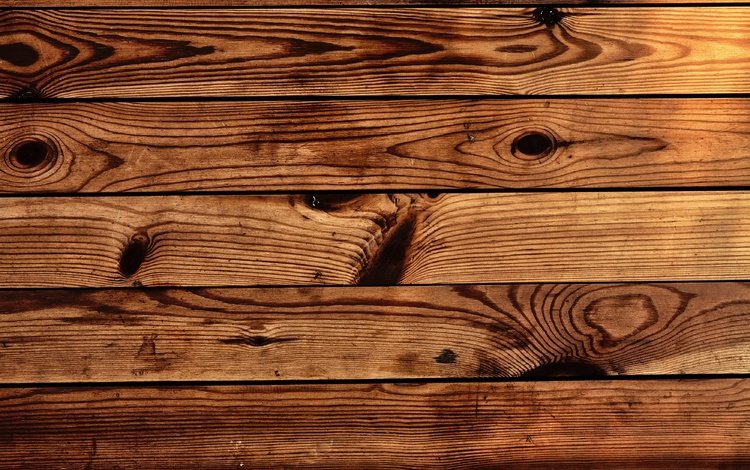 tree, texture, background, board, wooden surface, wooden background
