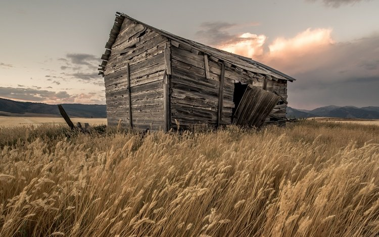 the sky, grass, clouds, field, house, spikelets, the barn