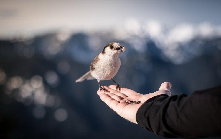 природа, рука, птица, клюв, воробей, ладонь, nature, hand, bird, beak, sparrow, palm