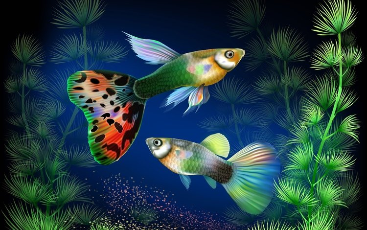 plants, fantasy, fish, fish guppies
