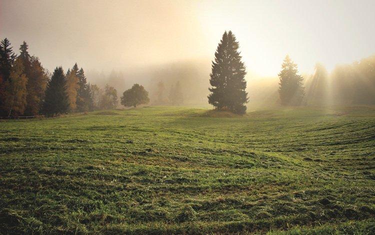 трава, деревья, утро, туман, поле, grass, trees, morning, fog, field