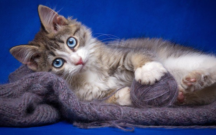 cat, muzzle, mustache, look, kitty, tangle, thread, yarn