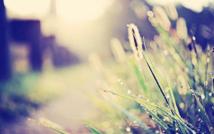 light, grass, rosa, drops