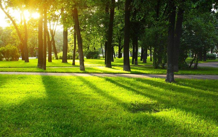 grass, trees, girl, park, look, hair, face, lawn, sunlight