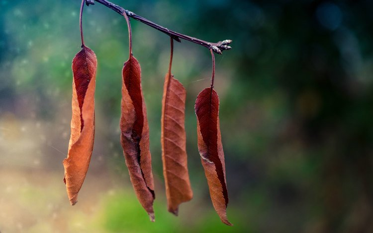 branch, nature, leaves, macro, autumn