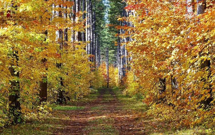 road, trees, forest, landscape, autumn