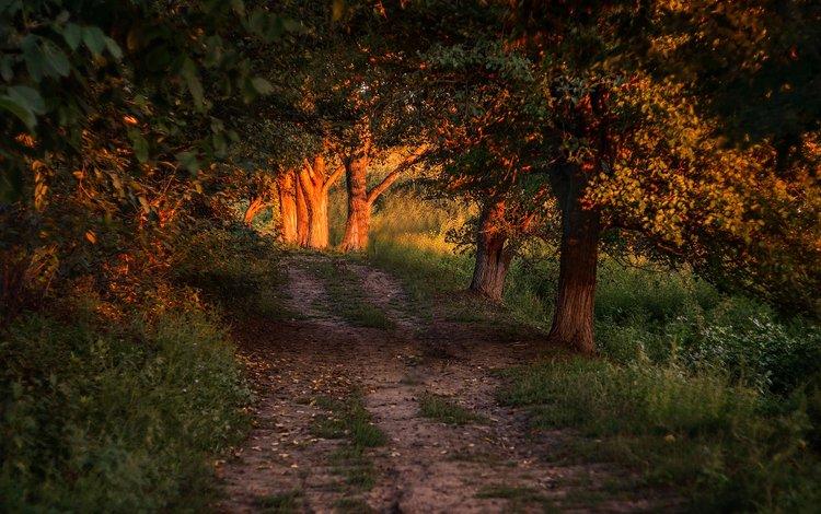 light, road, trees, forest, leaves, sunlight