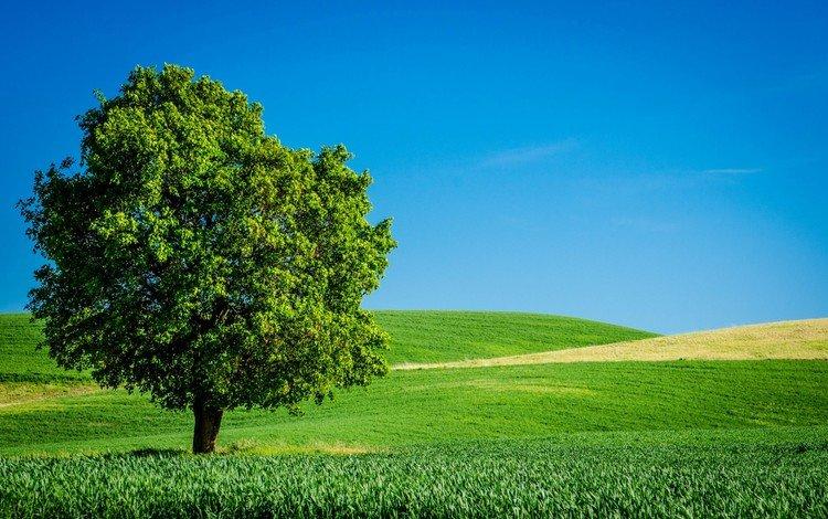 the sky, grass, tree, field, horizon, summer