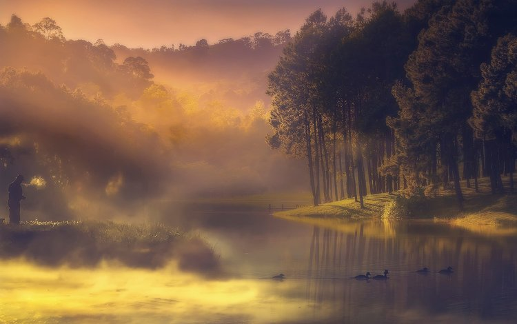 trees, lake, nature, forest, landscape, morning, fog, birds, duck