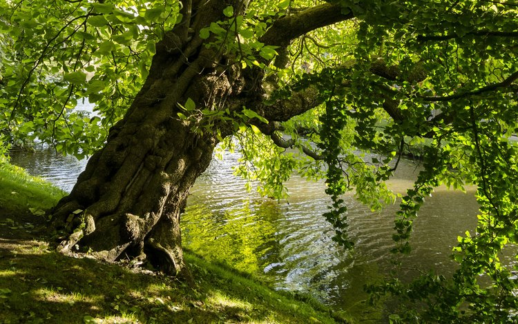 lake, tree, leaves, landscape, park, branches