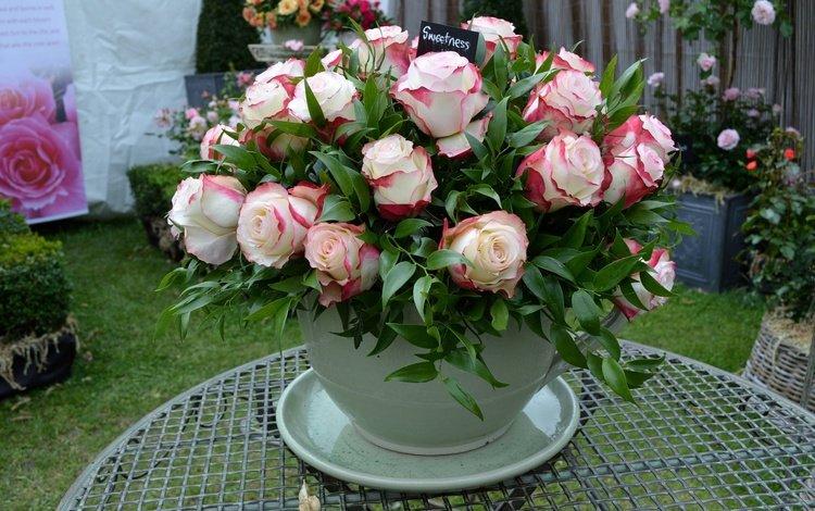 flowers, buds, leaves, roses, petals, bouquet, vase