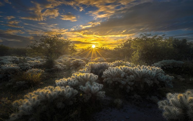 the sky, clouds, the sun, nature, rays, cacti, mexico, luis lyons