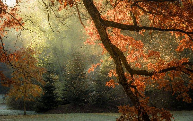 light, trees, leaves, rays, autumn